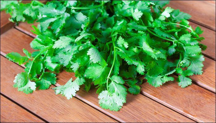 थंडीत भरपूर खा हिरवी कोथिंबीर
