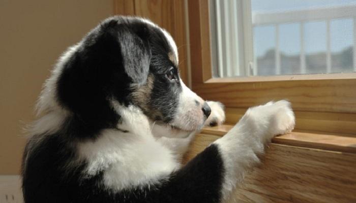 हे पाहिल्यानंतर तुम्हीही कुत्र्याला घरात एकटे सोडून जाणार नाही