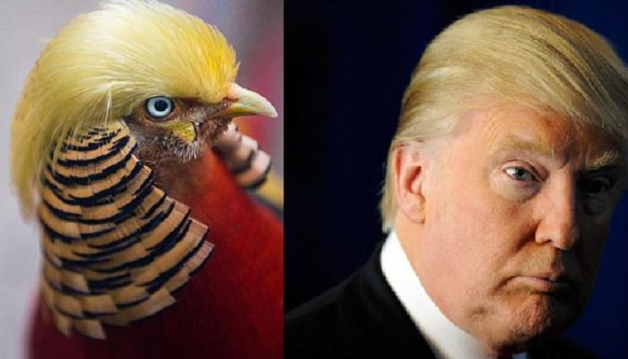 अमेरिकेचे अध्यक्ष ट्रम्प आणि त्यांच्या चेहऱ्याचा हा पक्षी चर्चेचा विषय
