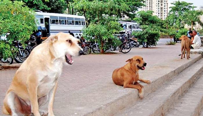 उल्हासनगरमध्ये भटका कुत्रा 10 मुलांना चावला