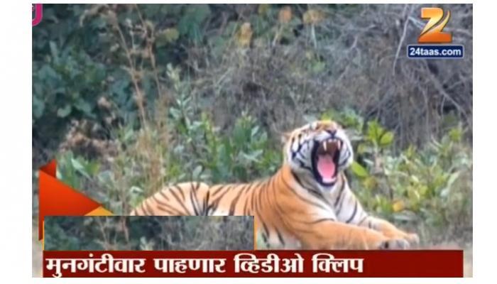 जय वाघाची व्हिडीओ क्लिप मागवली आहे- मुनगंटीवार