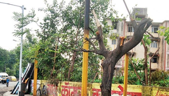 वृक्ष प्राधिकरणाच्या हजारो वृक्षांची तोड बेकायदेशीर