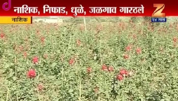 उत्तर महाराष्ट्रात मोठ्या प्रमाणात थंडीची लाट