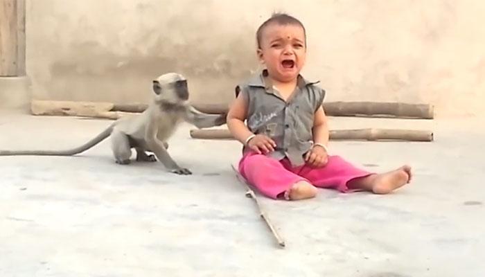 खोडकर माकड आणि चिमुरड्याचा मजेशीर व्हिडिओ