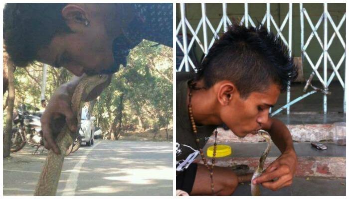 कोब्राला किस करणं पडलं महागात, तरुणानं गमावला जीव