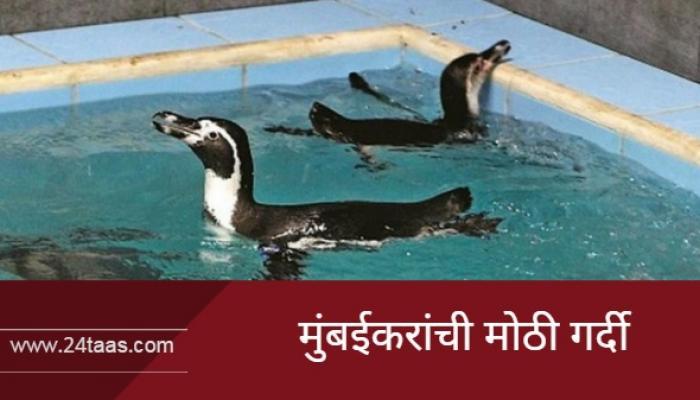 पेंग्विन दर्शनासाठी मुंबईकरांची मोठी गर्दी