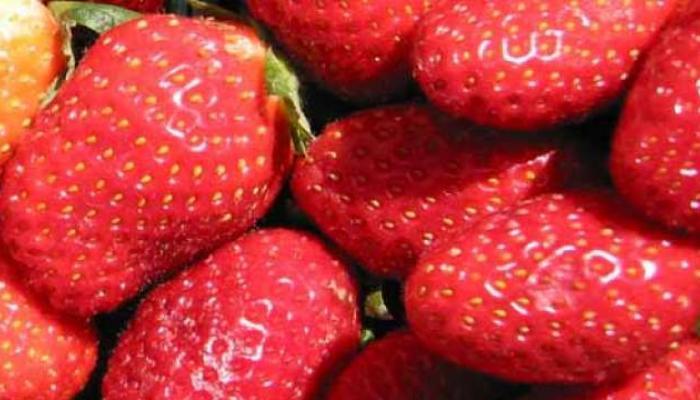 महाबळेश्वरच्या स्ट्रॉबेरीला आंतरराष्ट्रीय दर्जाचे नामांकन