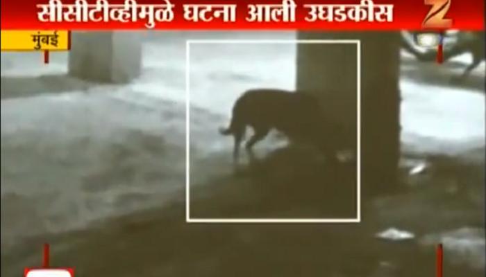 माणुसकीला काळिमा : भटक्या कुत्र्यांना विष देऊन केलं ठार