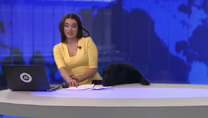 व्हायरल व्हिडिओ : कुत्र्याची LIVE कार्यक्रमात एन्ट्री