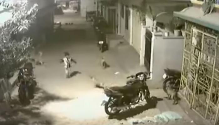 कुत्र्यांनी पाठलाग करत चिमुकल्याला घेरले...पण बालकाने असे दाखवले साहस...पाहा व्हिडिओ
