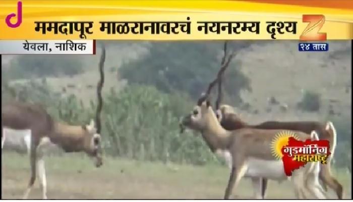 हे सुंदर दृश्य आहे महाराष्ट्रातलं