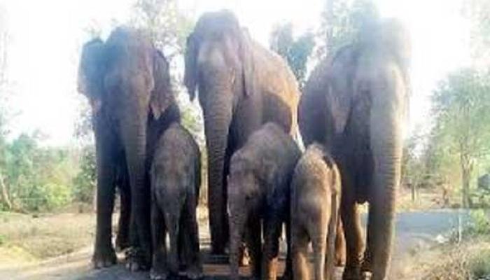 हत्तींसोबत सेल्फीचा प्रयत्न, युवकाला हत्तीने चिरडलं