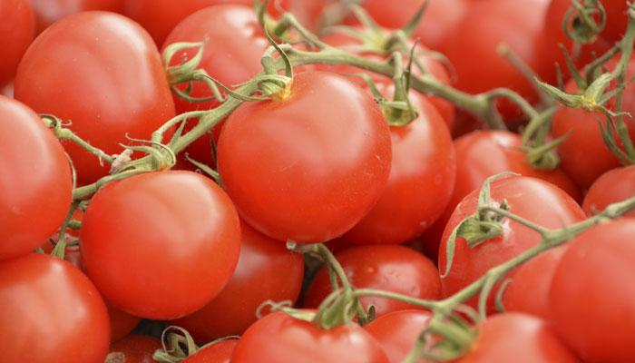 लखनऊमध्ये १० रुपये किलोने विकले जातायत टोमॅटो