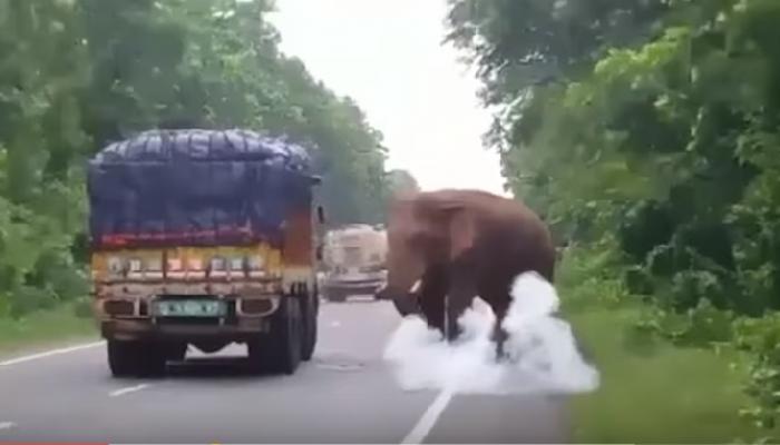 हत्तीने बटाटे खाण्यासाठी रस्त्यावरची वाहतूक थांबवली