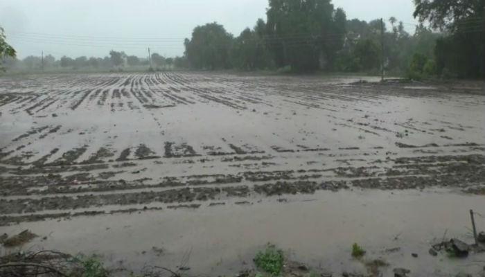 हवामान खात्याचा अंदाज खरा ठरला! बीडमध्ये मुसळधार पाऊस