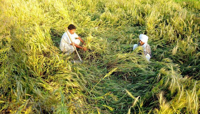 पीक विमा योजनेचा तब्बल ९० लाख शेतकऱ्यांना लाभ