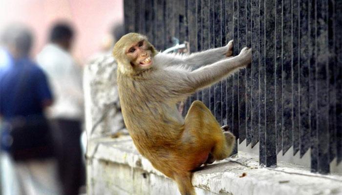 ... म्हणून राष्ट्रपती भवनात माकड शिरला