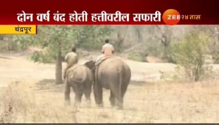 खुशखबर! ताडोबात हत्तीवरील सफारी पुन्हा सुरू