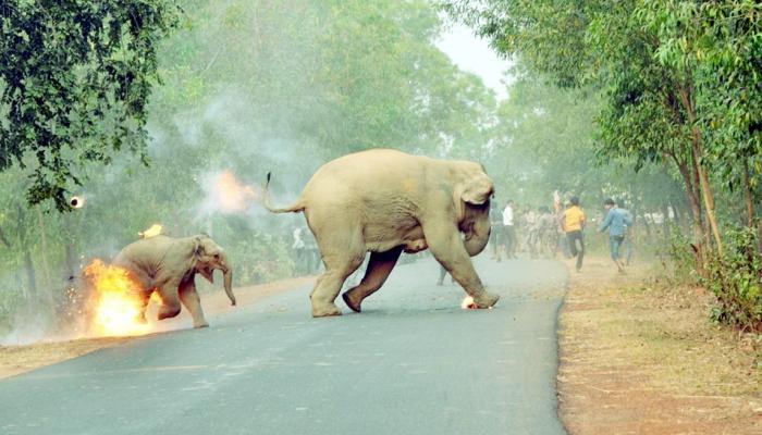 आगीत जळणाऱ्या हत्तीचा हा फोटो होतोय व्हायरल