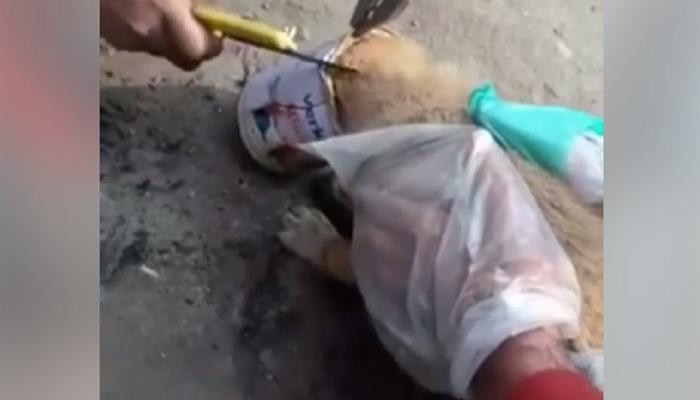 VIDEO : काश्मीरमधल्या मानवतेचा हा व्हिडिओ होतोय वायरल