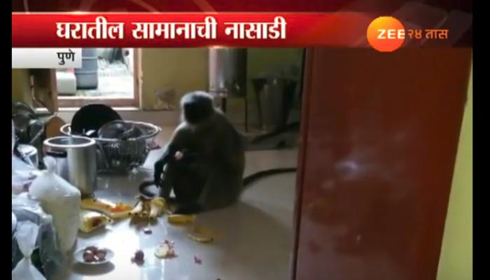 पुण्यात माकडांचा उपद्रव, घरात घुसून वस्तूंची नासाडी