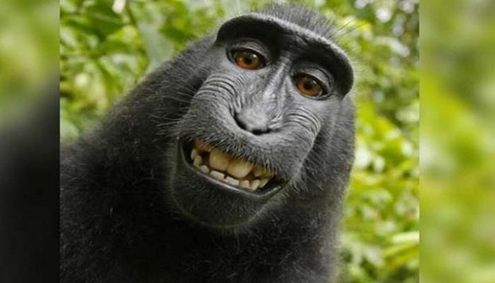 सेल्फीवाले माकड ठरले 'पर्सन ऑफ द इअर'