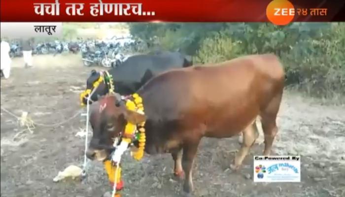 या  शेतकर्याने साजरा केला गायीचा पहिला वाढदिवस