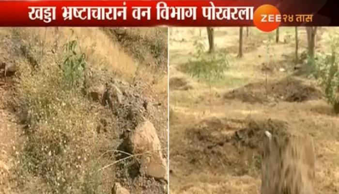 झी मीडियाचा दणका : पश्चिम महाराष्ट्रातील वन घोटाळ्याची चौकशी