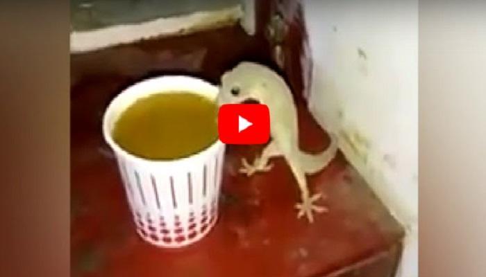 viral video : पाल घेतेय चहाचा आस्वाद
