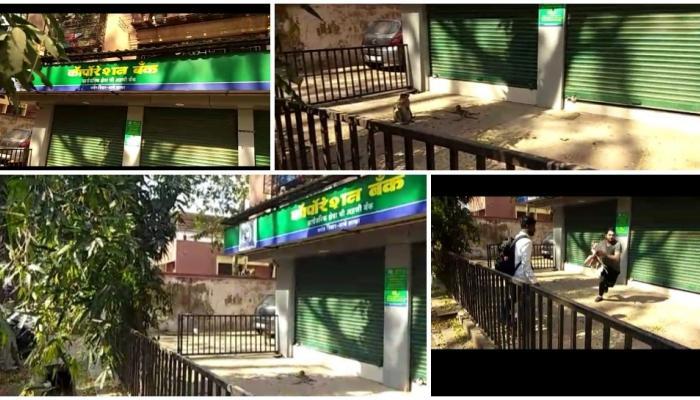 माकडिणीने यासाठी धरलं कॉर्पोरेशन बँकेचं दार (व्हिडिओ)