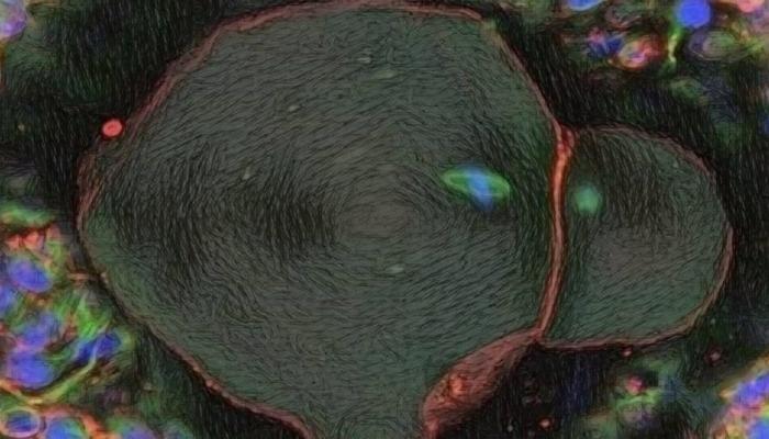 मानवी अंडे बनवल्याचा संशोधकांचा दावा