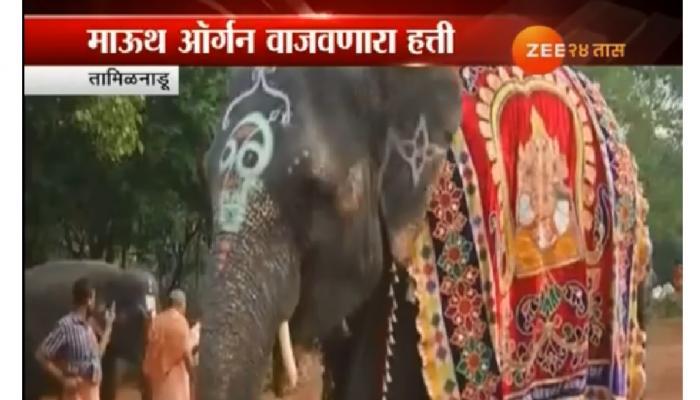 हत्ती चक्क सोंडेने माऊथ ऑर्थन वाजवतो....