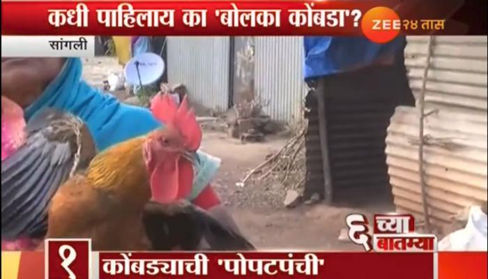 चक्क कोंबडा बोलतोय, बोलणाऱ्या या कोंबड्याला पाहण्यासाठी गर्दी