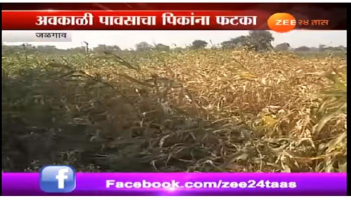 जळगावांत अवकाळी पावसामुळे शेतकऱ्यांचे नुकसान