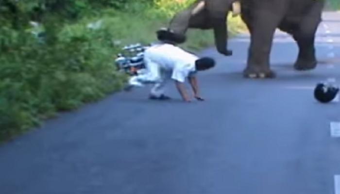 व्हिडिओ: हत्तीने मारली बाईकला किक, दुचाकीस्वाराला दिसला यमराज