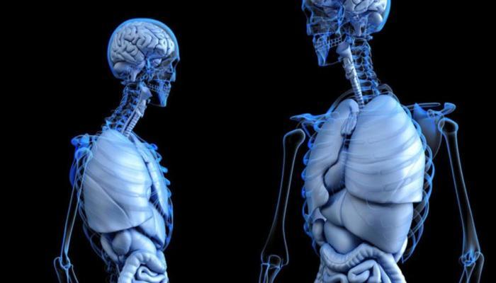 मानवी शरीरातील नव्या भागाचा शोध ; हा आहे शरीरातील सर्वात मोठा भाग
