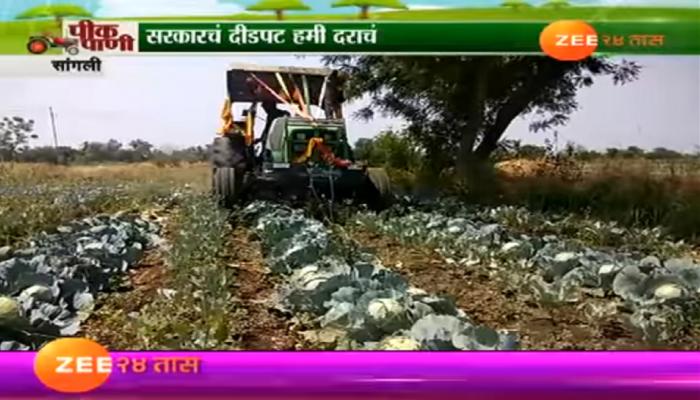 कोबीचे दर घसरले, शेतकऱ्याने शेतातल्या कोबीवर फिरवला रोटर