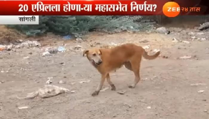 कुत्रा पाळताय? मग ही बातमी नक्की पाहा