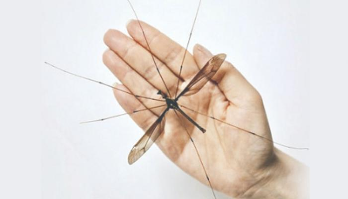 चीनमध्ये सापडला जगातला सर्वात महाकाय मच्छर, ११.१५ सेंटीमीटर पसरवतो पंख