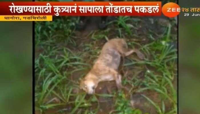 विषारी साप तोंडात पकडून कुत्र्यानं पोलिसांचे प्राण वाचवले