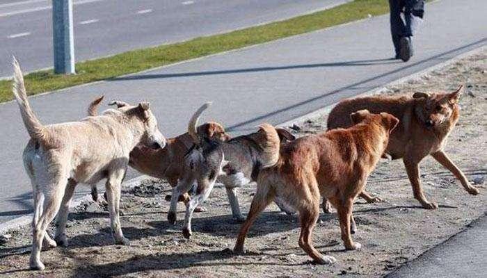 भटक्या कुत्र्यांच्या हल्ल्यामुळे नागरिकांमध्ये घबराट