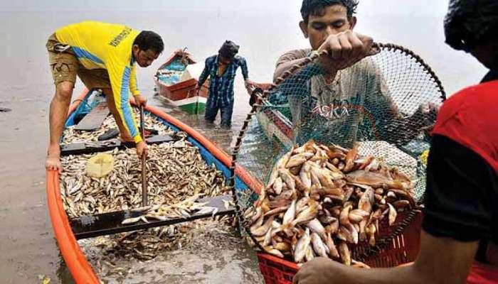 गोव्यात १५ दिवसांसाठी माशांच्या आयातीवर बंदी