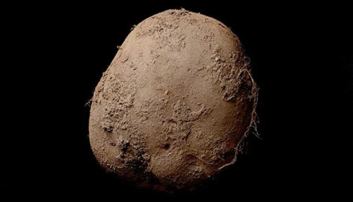 7 कोटींना विकला गेला हा एक बटाटा