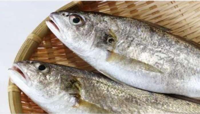 घोळ मासा खाण्याचे '7' आरोग्यदायी फायदे
