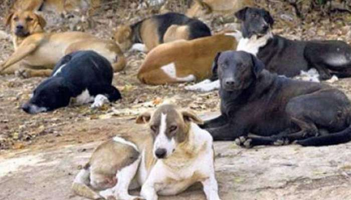 कुत्र्यांच्या हल्ल्यात जखमी विद्यार्थ्याचा मृत्यू