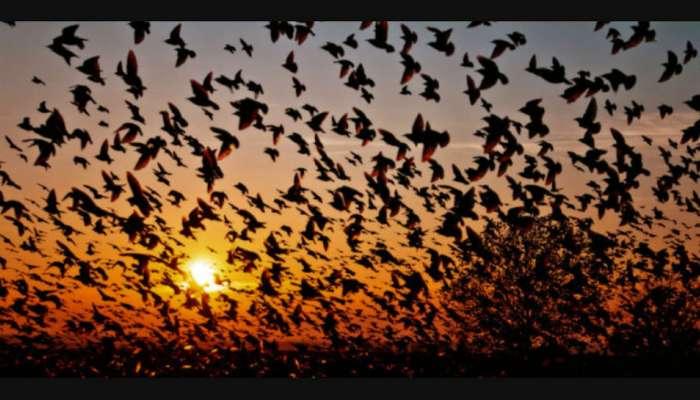 या ठिकाणी पक्षी करतात सामूहिक आत्महत्या