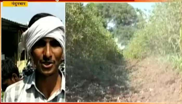 Nandurbar Farmers In Problem As No Market Price For Chilli