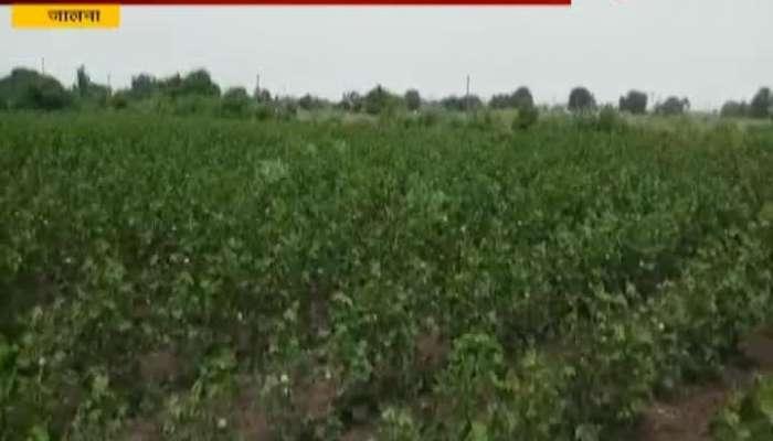 Jalna Farmers In Problerm As Crop getting Burn