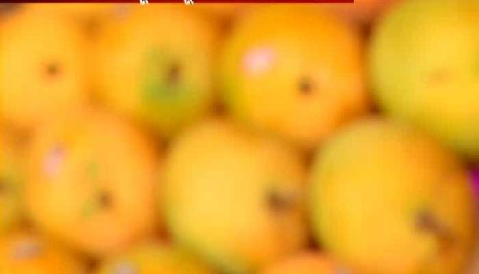Ratnagiri Alphonso Mango Get GI Tag