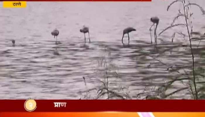Thane Creek Visit 243 Types Of Birds